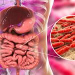 Darmbacterie VRE aangetroffen in Maasstad Ziekenhuis Rotterdam